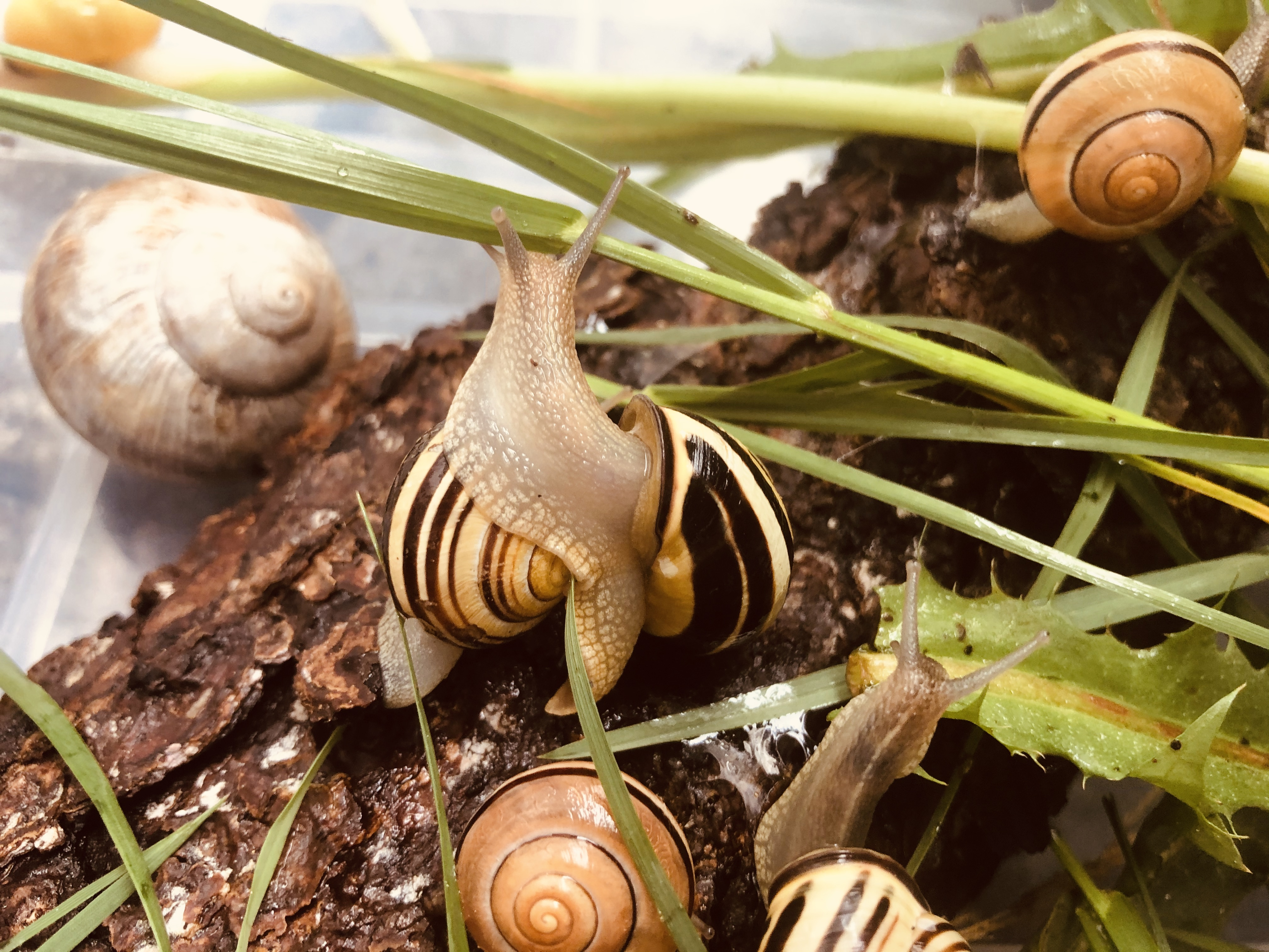 Snails in a box