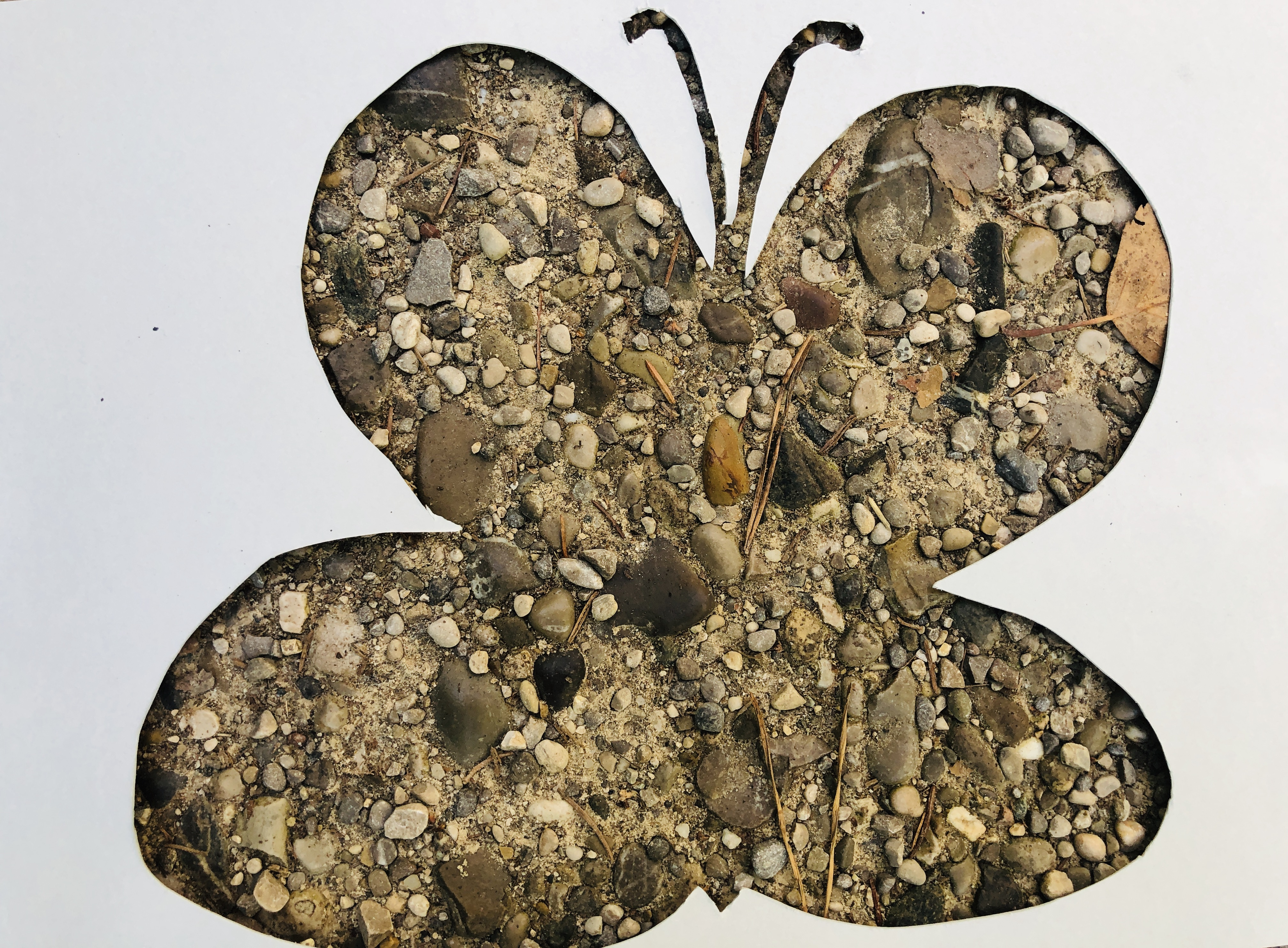 forest floor butterfly