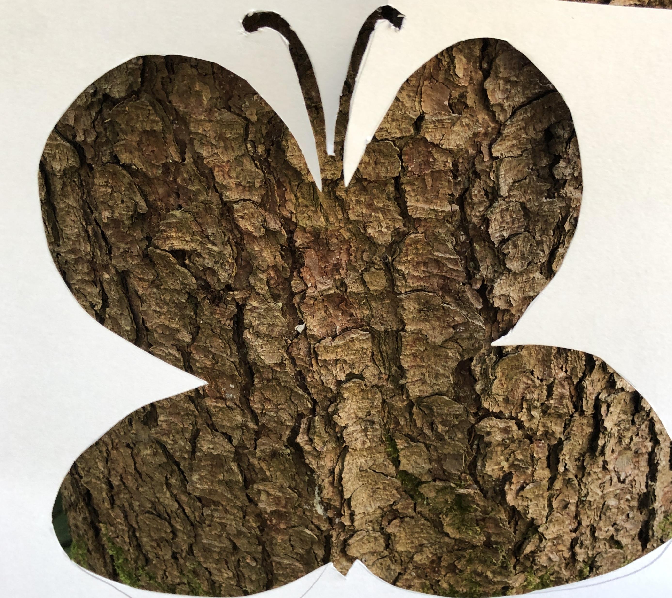 tree crust butterfly