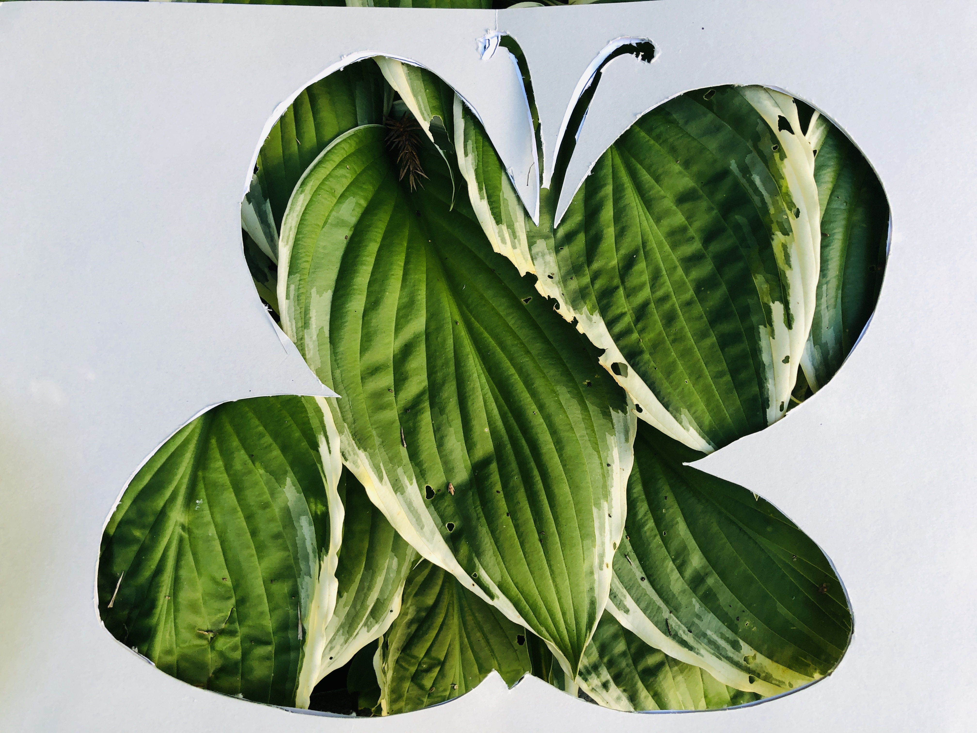 plant butterfly