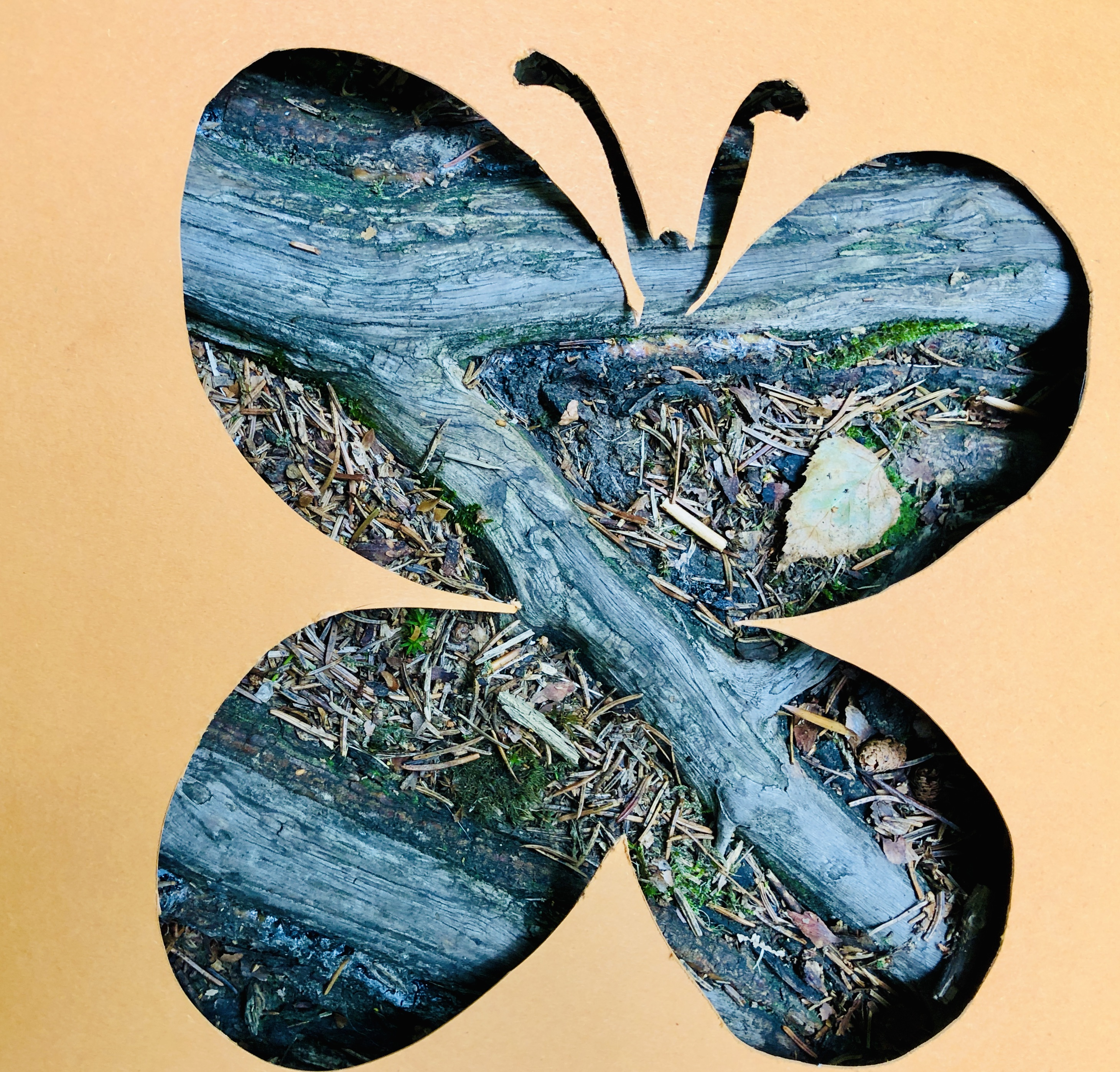 roots butterfly
