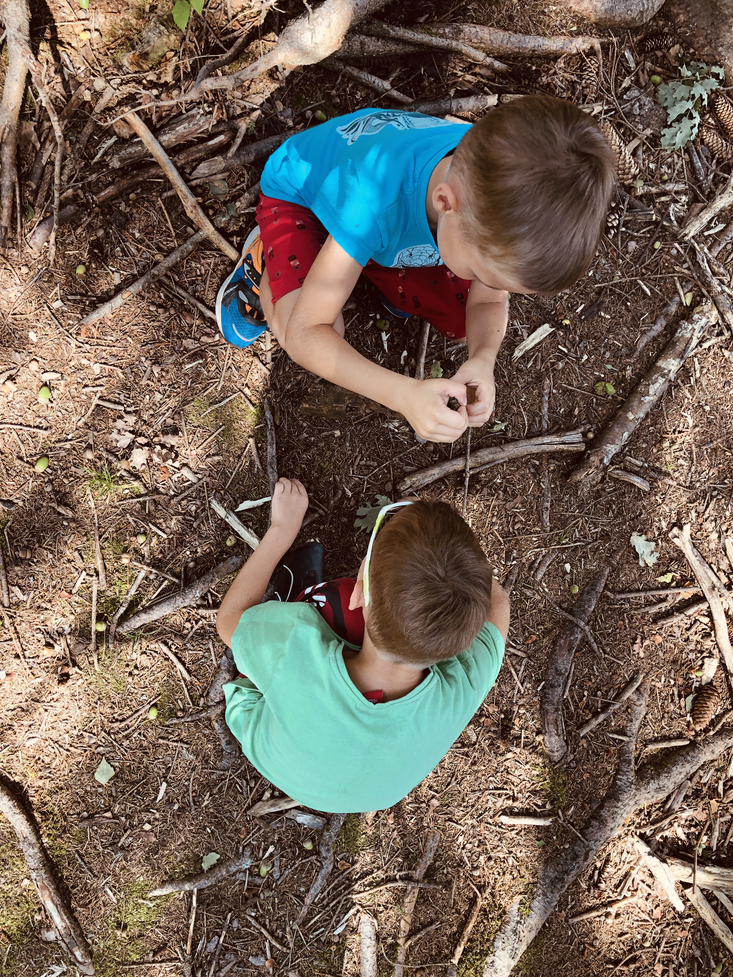 spending time in the forest looking for twigs and maple tree seeds