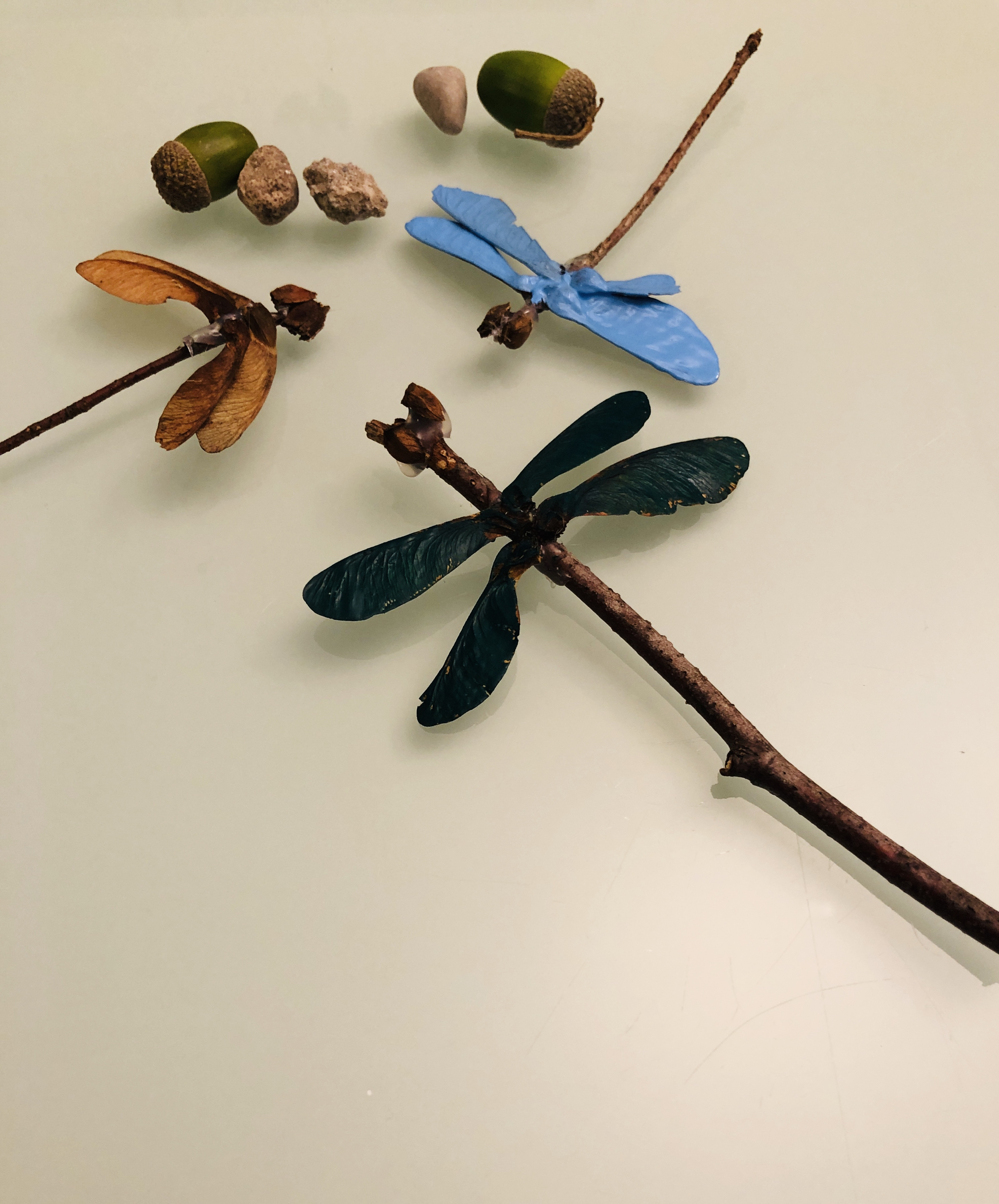 painted dragonflies