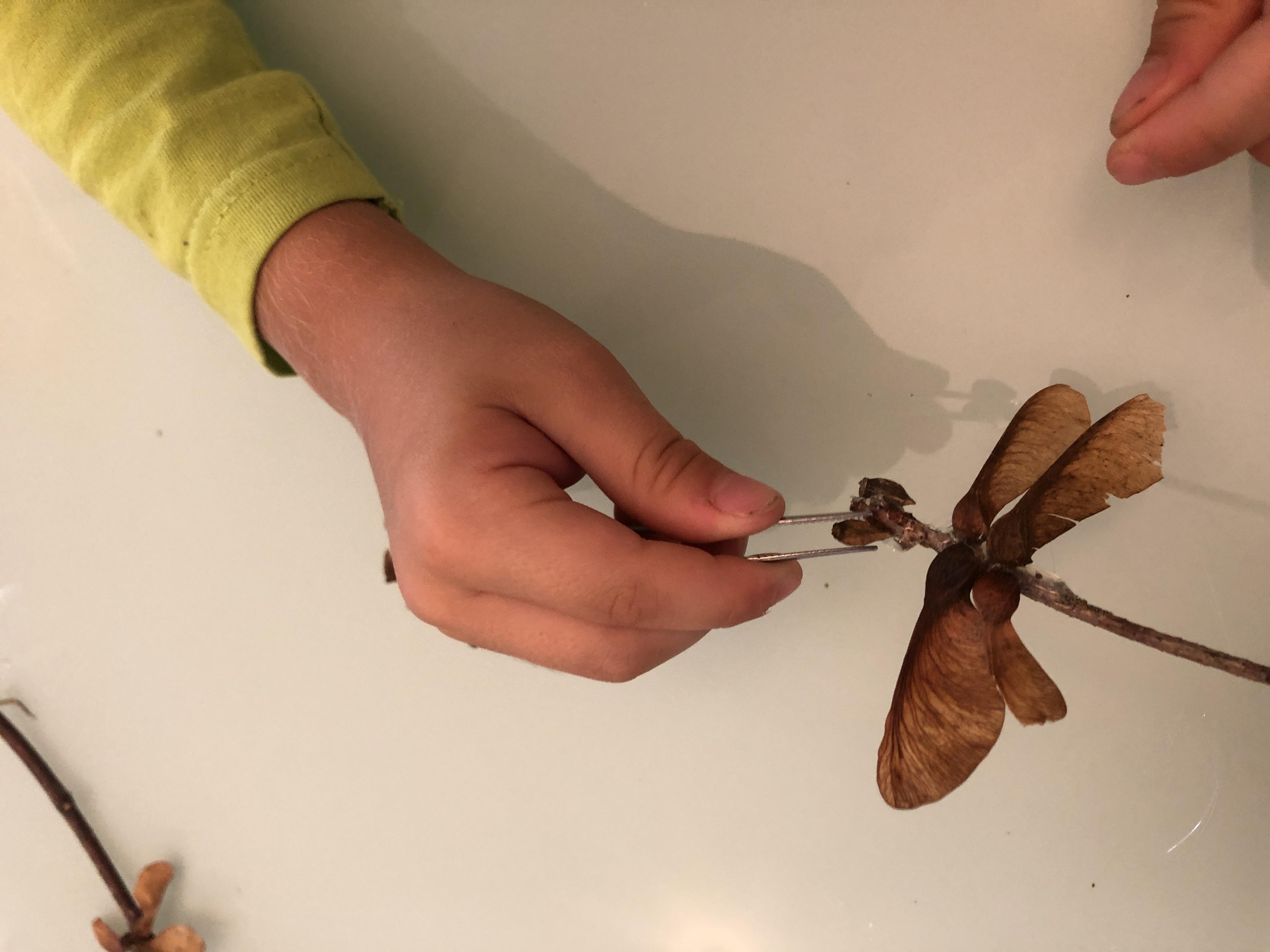 using tweezers for making dragonflies