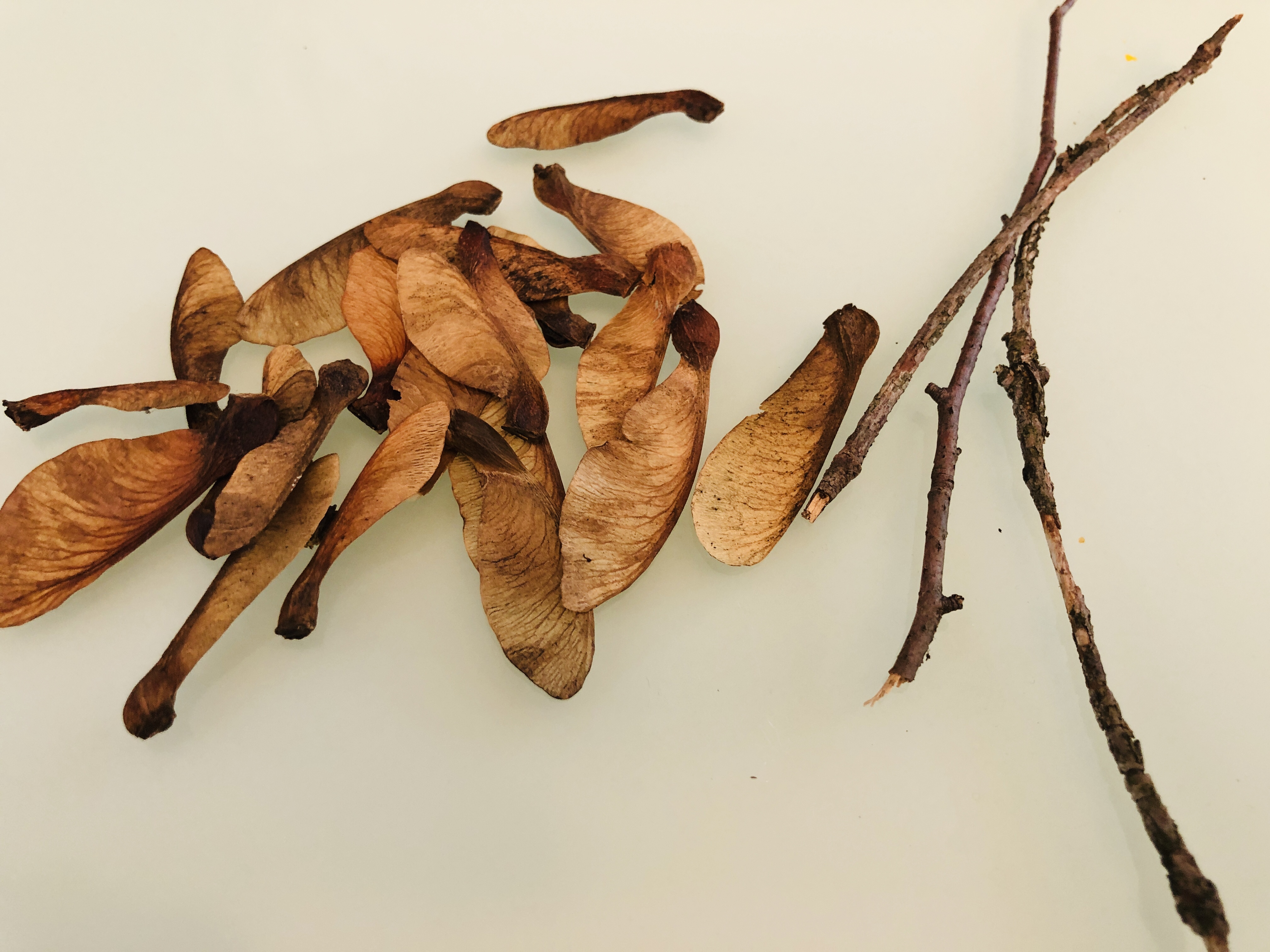 twigs and seeds for making dragonflies