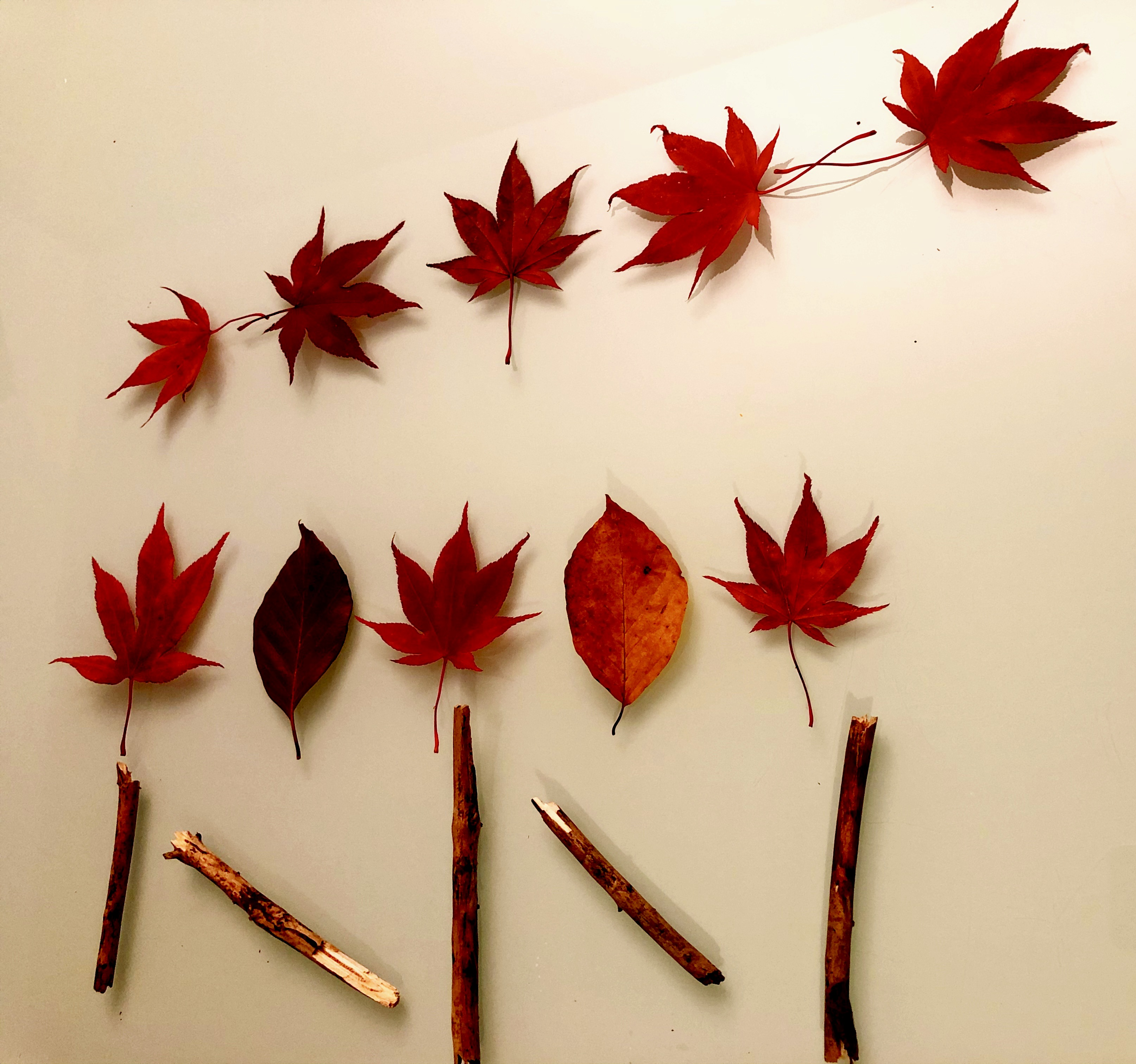 pattern recognition with leaves and sticks