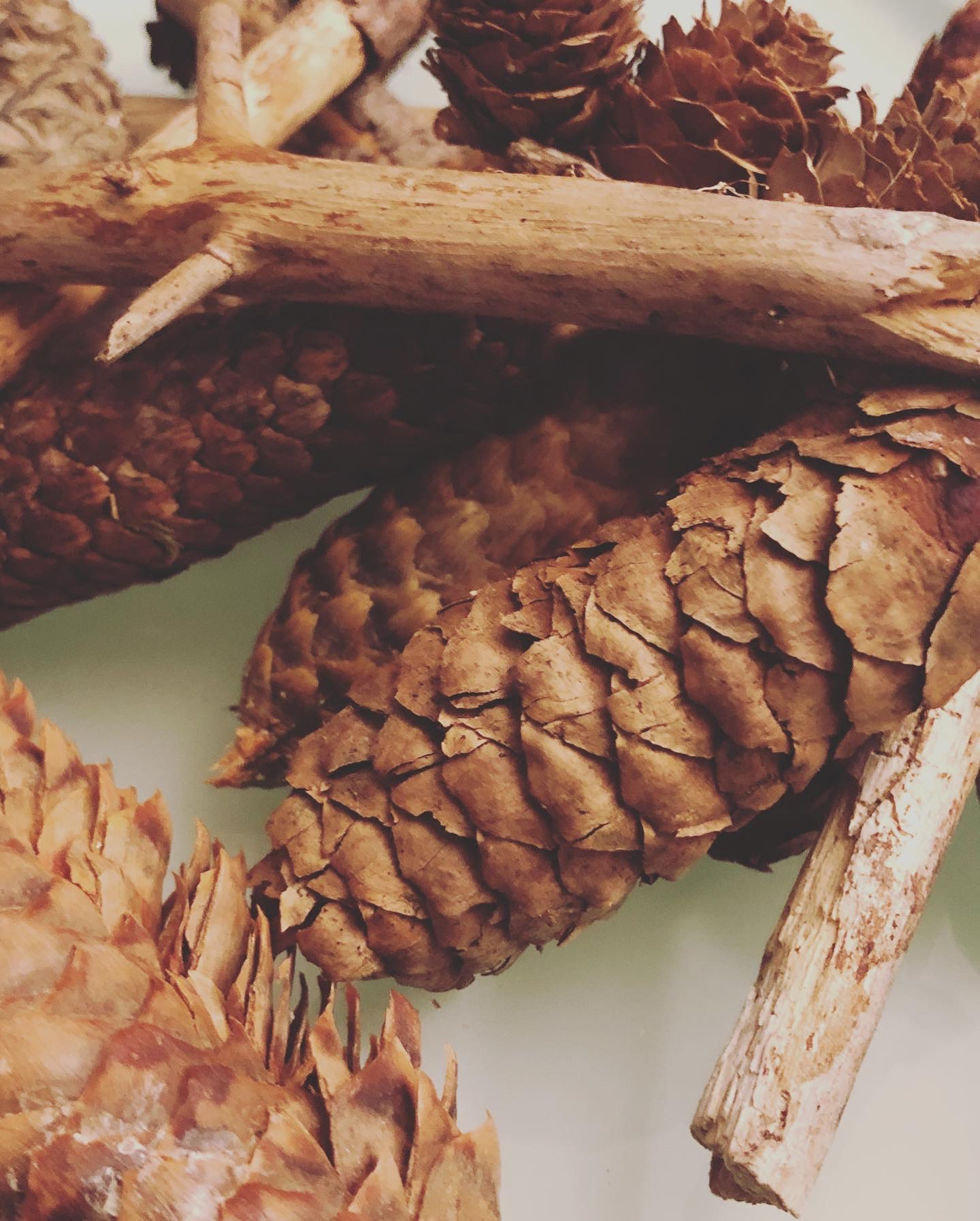 pine cones for the snow globe