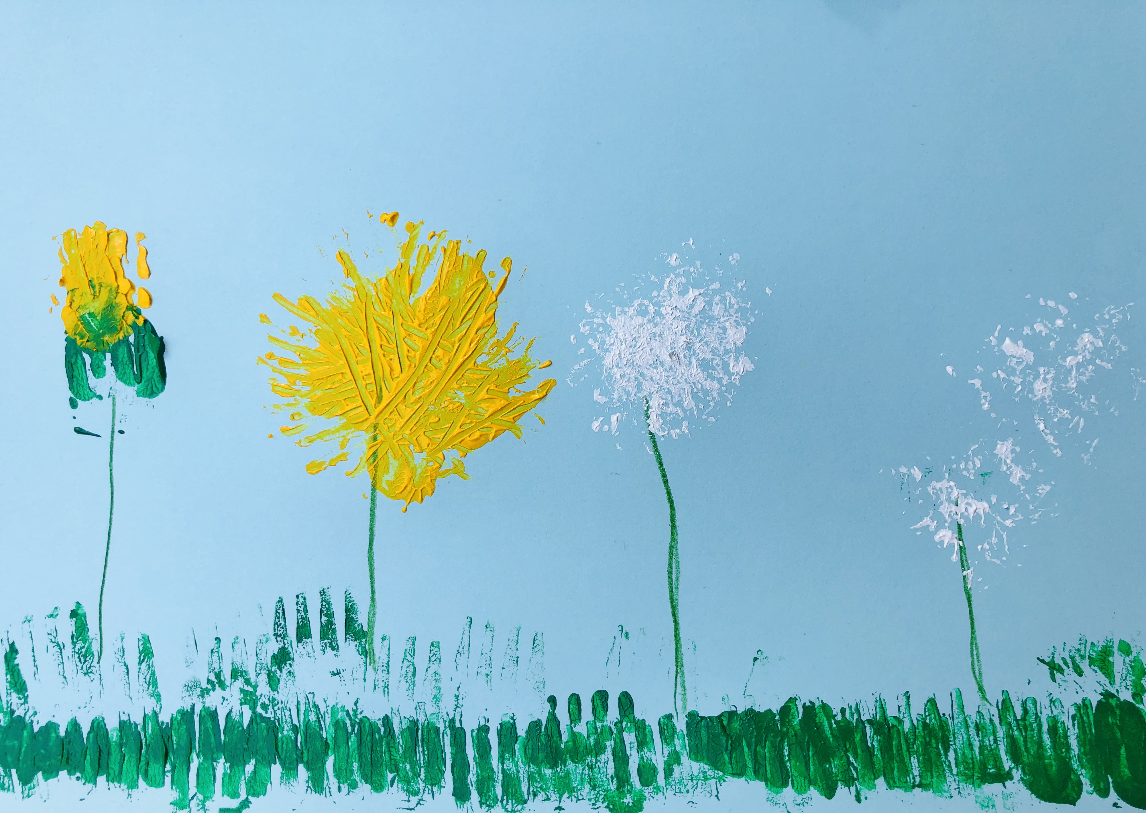 picture of a whole life cycle of a dandelion